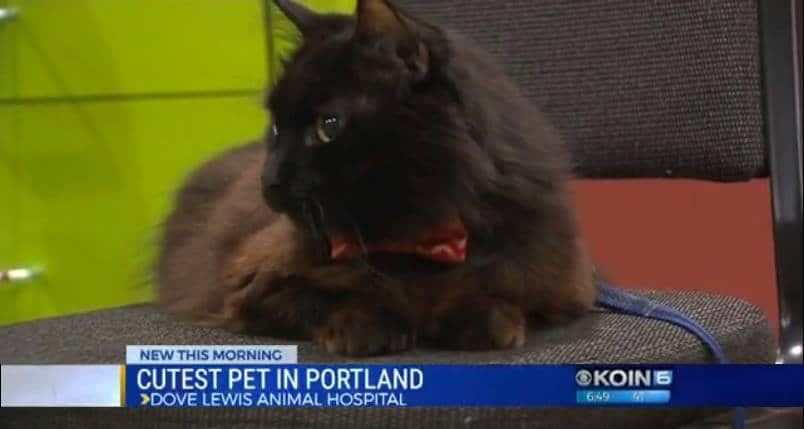 Keats on Koin News